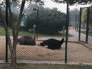 bahria town safari zoo